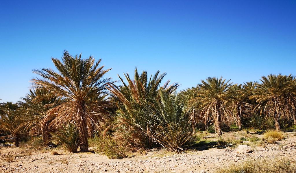 vista del oasis hacia Tamerza Tunez 02