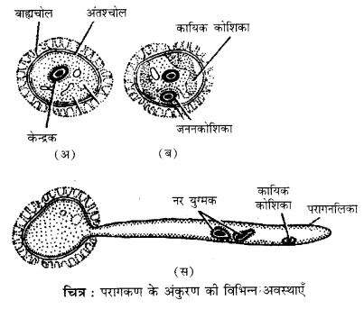 RBSE Solutions for Class 12 Biology Chapter 2 2Q.4