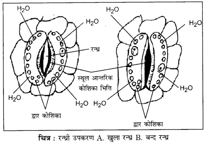 RBSE Solutions for Class 12 Biology Chapter 7 Q.1