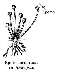 How do Organisms Reproduce Class 10 Notes Science Chapter 8 6