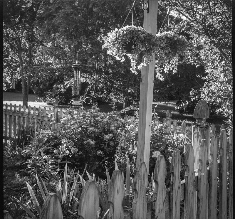 hanging planters, floral forms, picket fence, Asheville, NC, Bencini Koroll, Kodak Tri-X 400, HC-110 developer, 5.16.19