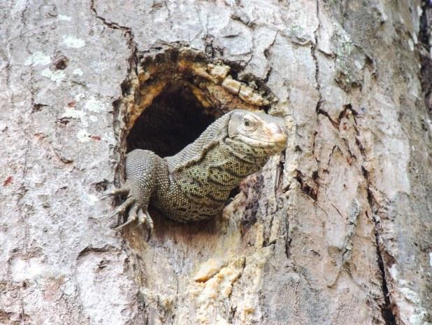 Fauna en Nepal