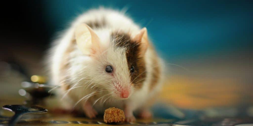 des-cellules-souches-redonnent-le-sens-des-odeurs