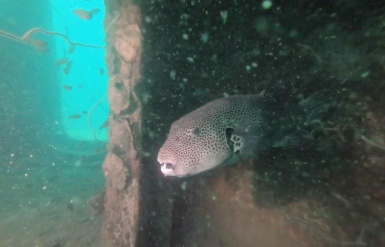 ปลาทะเล นอนหลบเหล่ามนุษย์ดำน้ำ