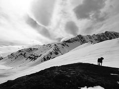 Ski Touring Dog