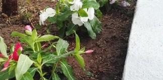 El Hornillo engalana sus jardines para celebrar las Fiestas de Santa Teresita