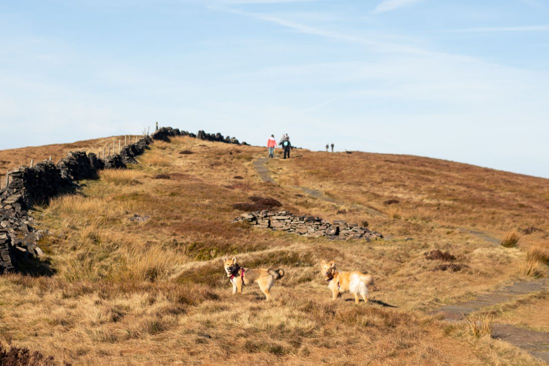 Errwater-Hall-Peak-District-Walk-with-Dogs