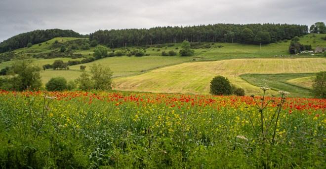 Day 166-19 poppy field