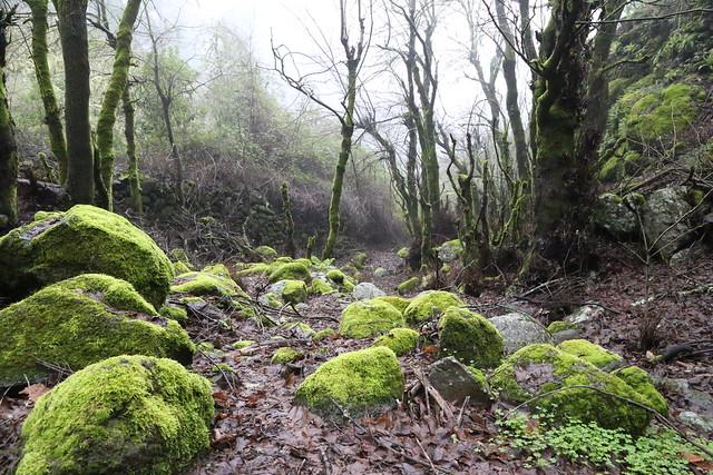 Ruta de senderismo por el bosque termófilo del Barranco del Andén en Valleseco