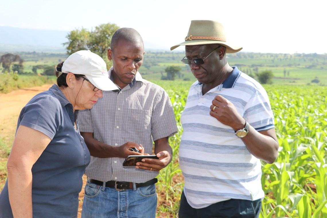 Irmgard Hoeschle-Zeledon, Job Kihara and Mateete Bekunda. Photo credit: Bevin Bhoke/IITA.