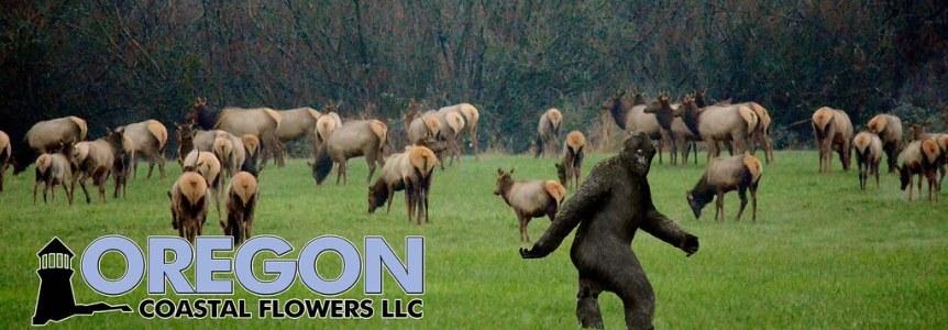 Bigfoot on the Farm