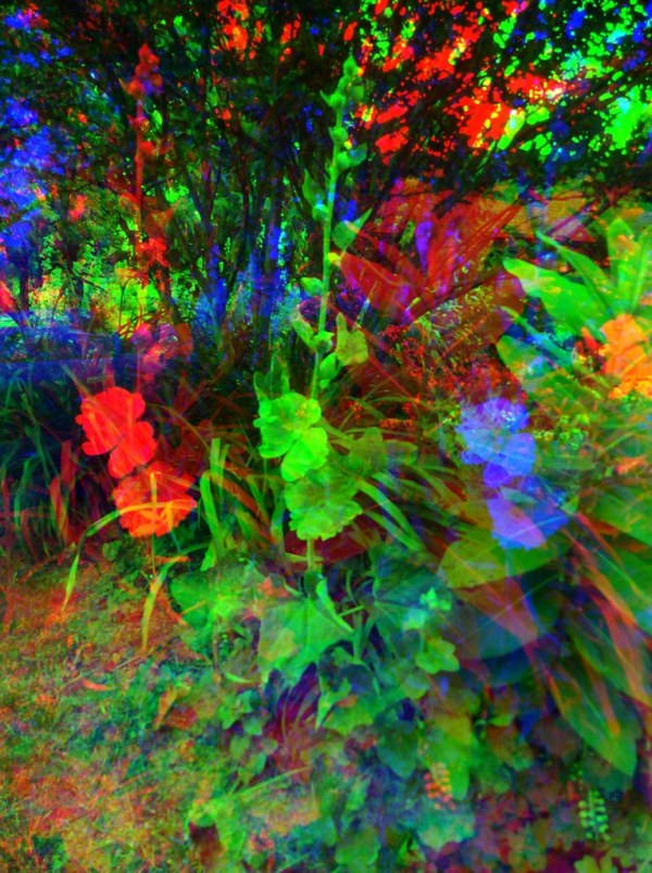 Week 25 Harris Shutter Effect  - Hollyhocks in the Garden