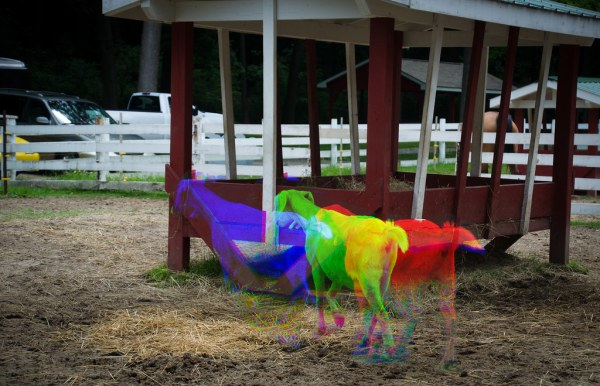 Rainbow Billy Goats