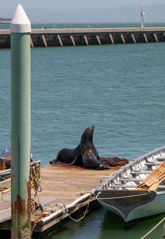 06.21. Sailing on Alma, San Francisco Maritime National Historic Museum