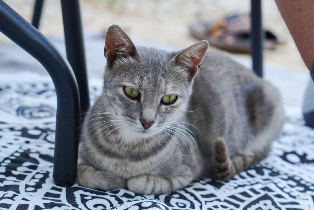 Kahdeksan kissaa: Fifi