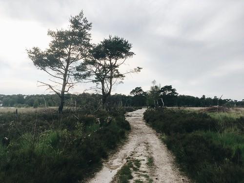 Kalmthoutse Heide | La Sabana de Flandes