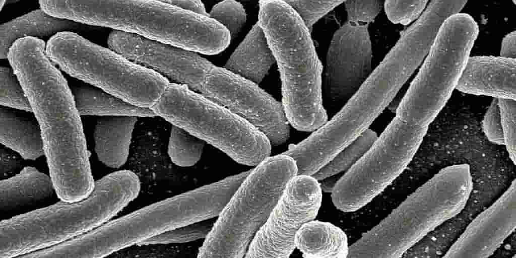 bactéries-détections-maladies