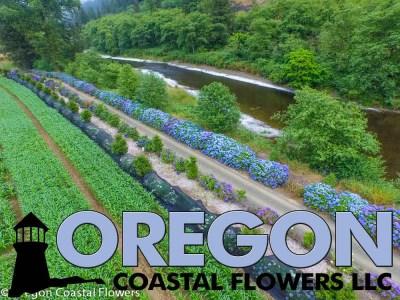 Oregon Coastal Flowers