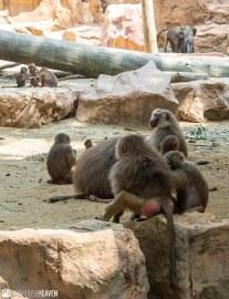 Singapore Zoo - 0727