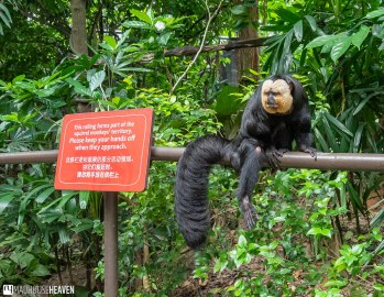 Singapore Zoo - 0551