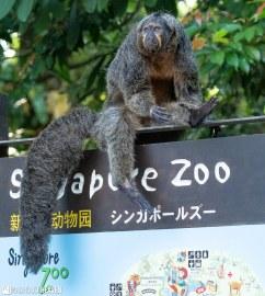 Singapore Zoo - 0472