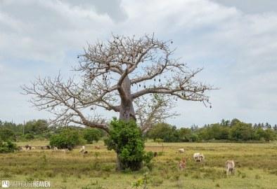 Kenya - 1616