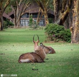 Kenya - 2295