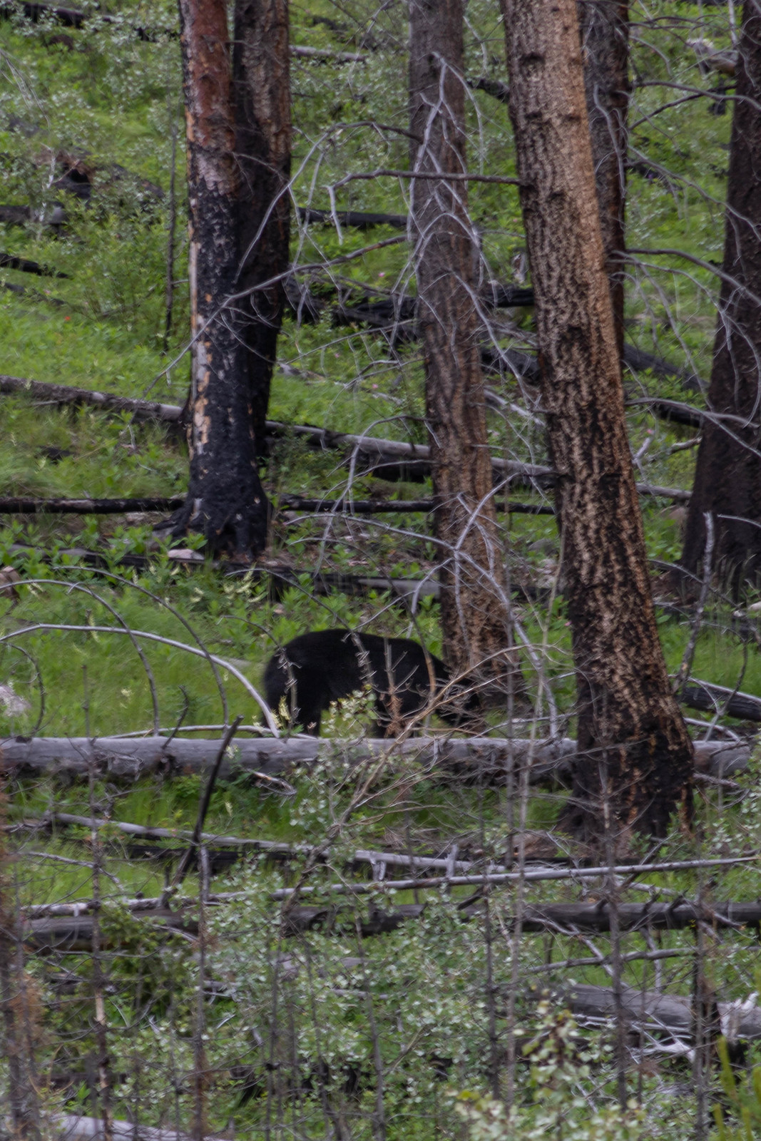 06.29. Banff National Park, AB, Canada