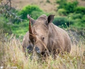 Kenya - 2882