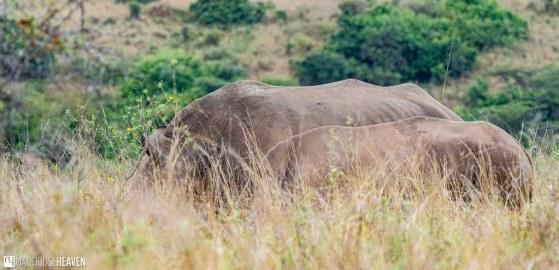 Kenya - 2848