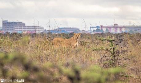 Kenya - 2796
