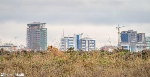 Kenya - 2817