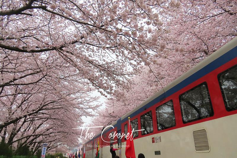 韓國|慶尚南道|鎮海|美不勝收的櫻花 一起到鎮海吧! 慶和站 경화역 @ The Coronet :: 痞客邦
