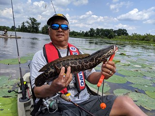 Photo of man holding up a northern snakehead.
