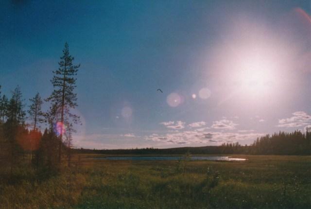 Kurjenaapa, Lappland