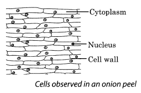 Cell Structure and Functions Class 8 Science NCERT Textbook Questions A3