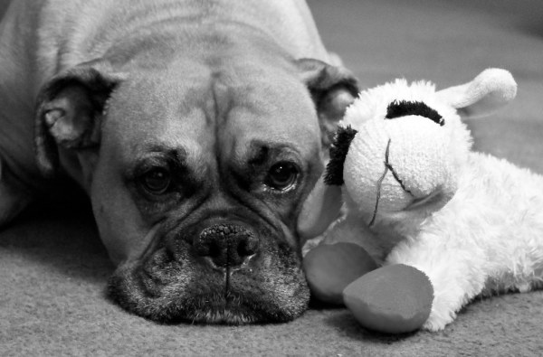Week 29: Juxtaposition - Hayley and Lamb Chop