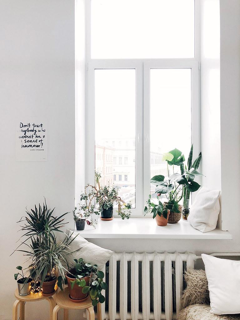צמחים שמתאימים לתוך הבית