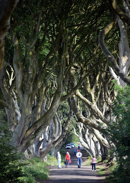 Dark Hedges July19