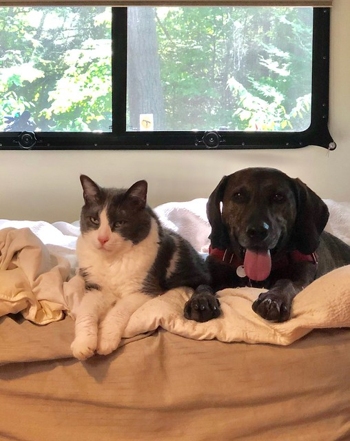 Mikisew - Puck and Hector on the bed