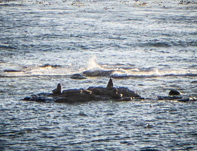 Samish Island to Coos Bay-32