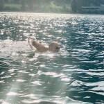 Traversata della Manica   Oriana test positivo nel lago di Poschiavo
