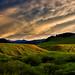 Green Grass Montana Skies
