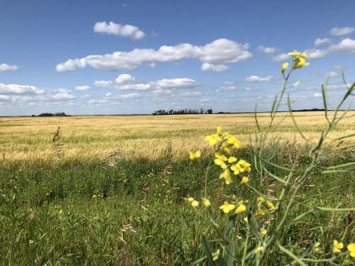 Humboldt - grassland