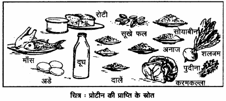 RBSE Solutions for Class 12 Home Science Chapter 16 विशिष्ट अवस्था में पोषण- गर्भावस्था.2
