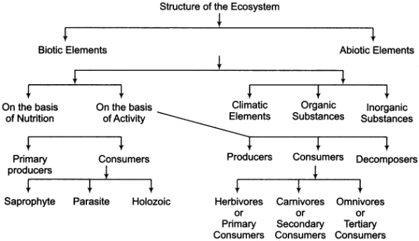 RBSE Solutions for Class 11 Physical Geography Chapter 22 Concept of Ecosystem 2