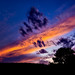 Billings Montana Sunset Tree
