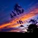 Billings Montana Sunset Tree