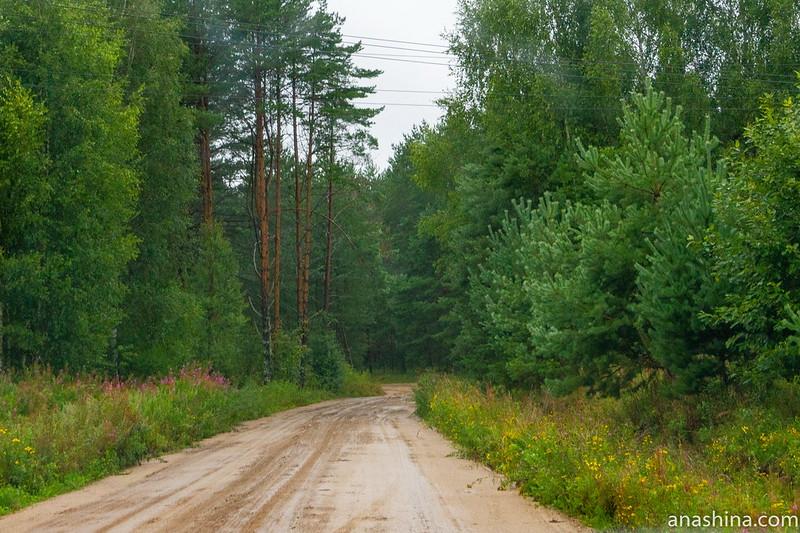 Переславские леса