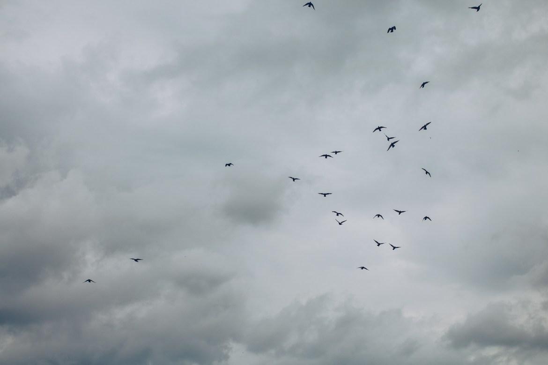 Fåglar bland regnmoln - reaktionista.se